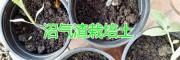 云南红河农用沼气渣销售,附质量检测报告