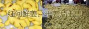 红河州生姜、干姜片供应产地,辐射昆明、玉溪的黄姜销售网