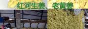 红河优质中药用干姜片批发价格,干姜片图