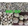会泽优质核桃仁出售,各种规格白芨苗批发