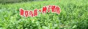 黄草乌种子(附图)_15894559566