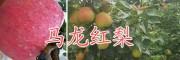 云南红梨种植基地/马龙红梨批发价格是多少-曲靖红梨销售