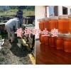 云南蜂王浆高产蜂合作社-普洱蜂王浆图片,蜂王浆供应