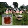 云南蜂蜜供应商:普洱蜜海蜂蜜生产合作社