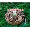 鸡足山冷菌干供应-云南松茸干批发-大理二级松茸干厂家