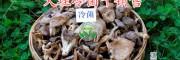 鸡足山冷菌干销售-云南二级松茸干-大理野生干杂菌
