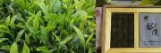 生态绿茶图片