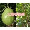 香橼水果基地/香橼果图片-云南香橼果供应商