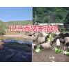 云南巴马香猪养殖基地-巴马香猪肉猪销售/香猪种猪