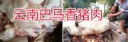 小耳朵香猪图片&云南小耳朵香猪销售价格-玉溪小耳朵香猪养殖
