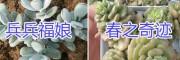 云南多肉批发供应商-【多肉植物盆栽销售】