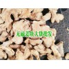 菜姜、干姜_姜块生产供应商(李先生 :13769556456)