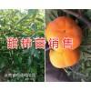 昭通李子苗销售&甜柿树苗供应*昭通红梨苗果苗基地