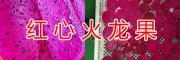 优质红心火龙果种植基地&云南红心火龙果13577623305