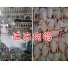 玉溪哪里批发速冻肉鸽&新鲜冷藏乳鸽出售-速冻肉鸽价格