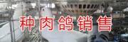 2018云南乳鸽种鸽价格*昆明肉鸽种鸽繁育销售&速冻鸽