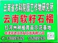 软籽石榴树苗——云南石榴树苗——软籽黑石榴树苗 (77146播放)