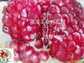 石榴树苗新品种——云南黑籽石榴树苗 (75097播放)