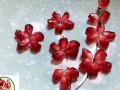 石榴苗——软籽石榴树苗——云南哪里有黑籽石榴小苗 (6626播放)