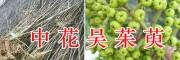 吴茱萸育苗技术公司-云南青野中药材开发有限公司