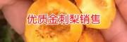 金刺梨供应厂家_求购贵州刺梨种子和苗找哪里?