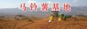 云南马铃薯批发商-昆明洋芋基地