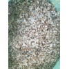 云南大理当归种子供应-免费提供种植技术-包回收