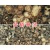 多花川黄精价格-四川中药材种植网黄精种茎苗现货