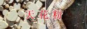 优质天花粉生产商-腾冲县新源中药材种植合作社
