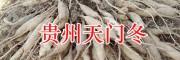 贵州天门冬批发-黔西南天冬苗/安龙县鑫茂生物科技