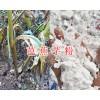 芭蕉芋新粉加工商-云南芭蕉芋粉出售&芭蕉芋收购