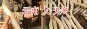 云南天门冬供应商—天冬种子&优质天门冬