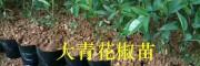 云南花椒苗栽培:大青花椒苗繁育技术-购苗技术指导