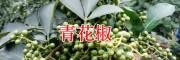 昭通青花椒价格-大青花椒基地直销/彝良青花椒合作社
