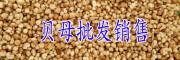 贝母多少钱一斤_毕节贝母现货/贵州贝母供应商