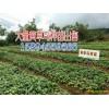 黄草乌统货_产地云南在亳州的价格是多少?亳州黄草乌