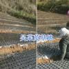 中花茱萸育苗技术&吴茱萸苗种植技术指导—丽江吴茱萸销售
