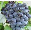 大理宾川葡萄多少钱一株式?