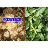 玉龙县鲁甸药材种植农民合作社产品供应信息 苍术供应