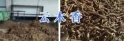 云木香供应商/400-6633-626丽江哪有云木香出售