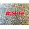 会泽金铁锁(独定子种子销售)批发_曲靖药材种子供应信息