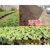 搞种植有机肥料哪个好_沼气渣能促使作物根系生长
