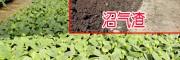 安全的有机肥料_沼气渣哪里有销售?
