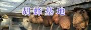 云南胡蜂蜂王买卖/胡蜂产品加工销售-15288058995
