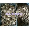 贵州黄精供应:姜形黄精干货-黄精多花苗/鸡头黄精种茎