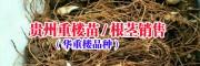 贵州重楼种植公司/重楼苗根茎销售-贵州重楼药材供应