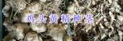 鸡头姜形黄精种茎-贵州鸡头黄精种茎(苗)批发