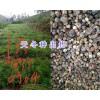 丽江永胜天冬种子-质量可靠可实地考察