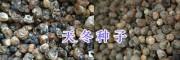 丽江哪的天门冬便宜-永胜大天冬产地销售18213296598