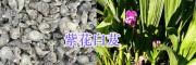 2018年紫花白芨供应商—大理剑川润滇中药材种植有限公司